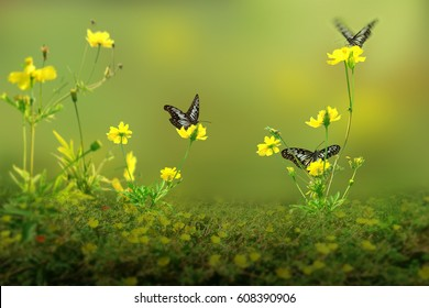 Beautiful Butterflies with yellow flowers