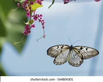 Beautiful butterfly in bird flight