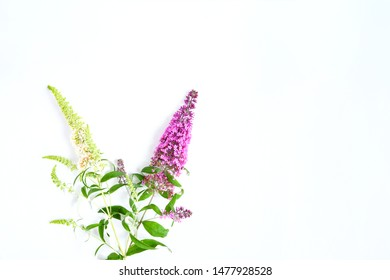 Beautiful butterfly bush  or Buddleia  flower in white, violet-pink cutting branch on white background isolated  ,a genus many species and attract butterflies and bees to the garden make life happy.