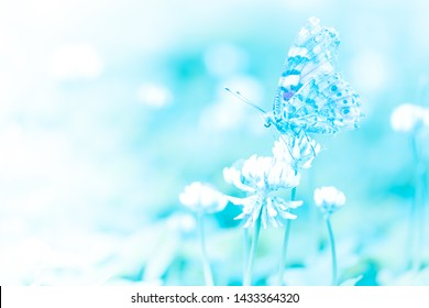 Beautiful butterfly caught on the grass flower soft blue bright colors style background