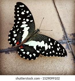 Beautiful butterfly Chiang Mai, Thailand