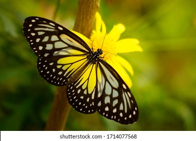 Beautiful butterfly feeding on a bright yellow flower closeup. Butterfly on a spring flower among the field