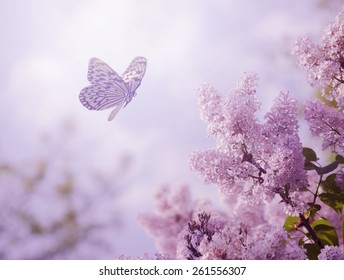 500 Purple Butterfly Pictures Royalty Free Images Stock Photos