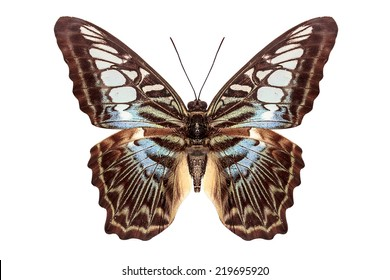 beautiful butterfly flying isolate on white background with clipping path