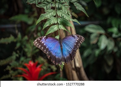 beautiful butterfly, forest butterfly, blue, butterfly on the leaves, butterfly picture