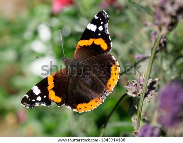 beautiful-butterfly-garden-vanessa-atala