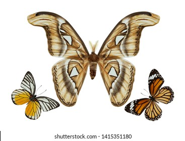 Beautiful butterfly group isolated on white background with clipping path