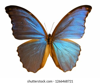 Beautiful butterfly isolated on white background. (whit clipping path)