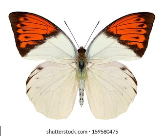 beautiful butterfly isolated on a white background