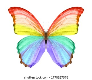 Beautiful butterfly isolated on a white background.
