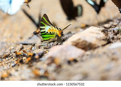 The beautiful butterfly at Kaeng Krach an National Park, Thailand (Taken from distance and selective focus point)