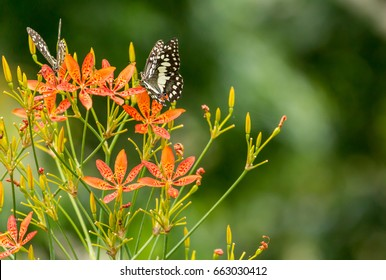 Beautiful butterfly and lovely flower on natural light background in the morning.