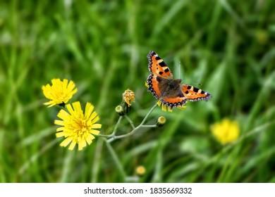Beautiful butterfly in the meadow - Shutterstock ID 1835669332