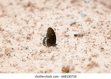 Beautiful butterfly in natural stone courtyard