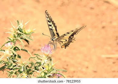 beautiful butterfly, nature and wildlife photo