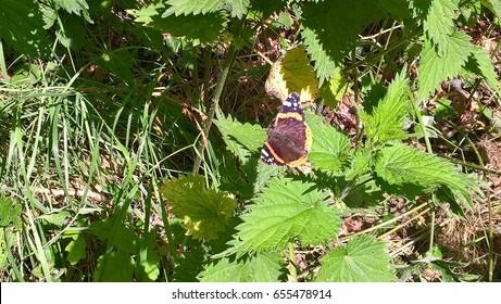 Beautiful butterfly in Norfolk