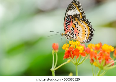 Beautiful butterfly on colorful flower in garden
