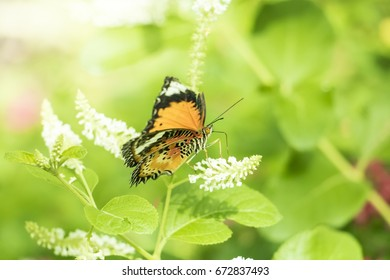 Beautiful Butterfly on Colorful Flower on green garden, Background nature