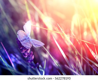 Beautiful butterfly on flower during sunset