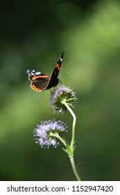 Beautiful butterfly on a flower in a forest