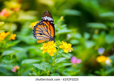 Beautiful Butterfly On Flower In The Park With Nature Background.