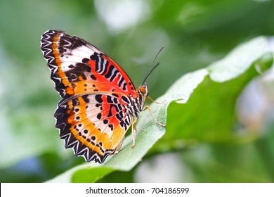 Beautiful butterfly on a green leaf.