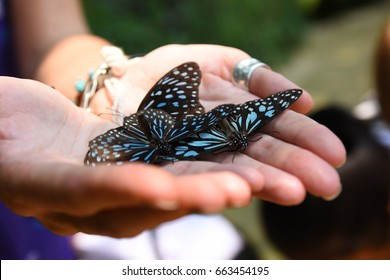 A beautiful butterfly on the hands