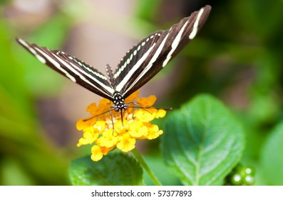 Beautiful butterfly on a small yellow flower