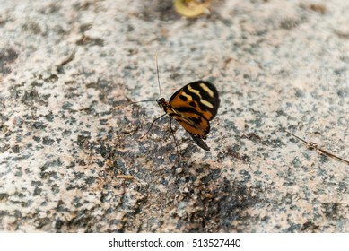 Beautiful butterfly on a stone