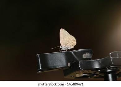 Beautiful butterfly on a tripod.