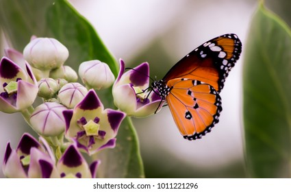 Beautiful butterfly from outdoor