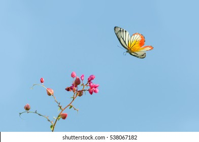 Beautiful butterfly (Painted Jezebel ) flying and pink flowers on blue sky background