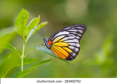 Beautiful butterfly in a butterfly park