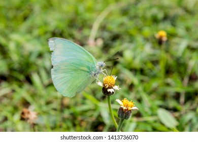 beautiful butterfly penched on flower and grasss