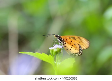 Beautiful butterfly perched on a flower in nature.