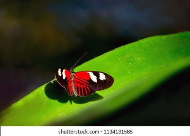 A beautiful butterfly in a pretty garden enjoys a sunbeam as it rests on a green leaf