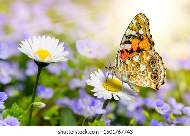 beautiful butterfly resting at bloomin daisy with sunbeams