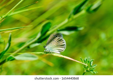 Beautiful butterfly resting on a blade of grass. Close-up