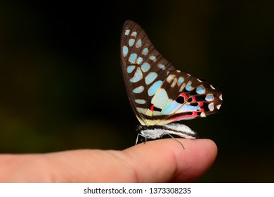 Beautiful butterfly resting on finger