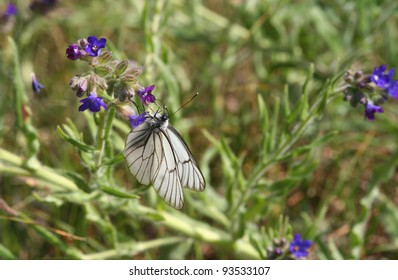 Beautiful butterfly searching for nectar in vegetation