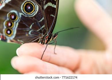 A beautiful butterfly as seen in Dubai's butterfly garden.