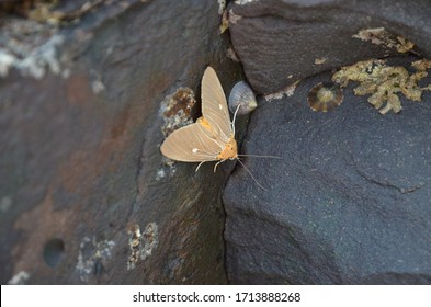 A beautiful butterfly sits on a stone. Indian Butterfly. Delicate Moth and Stone