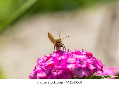 Beautiful butterfly sitting on flower. Insect macro photographed at summer