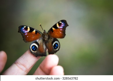 Beautiful butterfly sitting on the man hand
