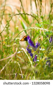 Beautiful butterfly sitting on purple blossom down at summery grass meadow