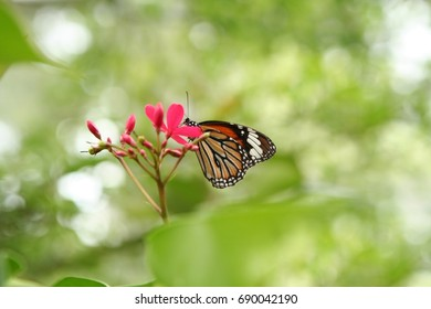 Beautiful butterfly and small flowers in the garden with nice bokeh