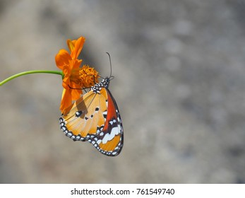 Beautiful butterfly Sucking on sweet and sour flowers and sunshine, blurry background and space for text or symbol with natural beauty conception, cute, gentle, refreshing, warm, summertime