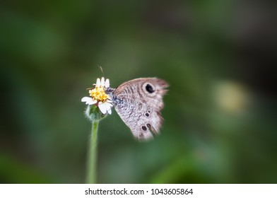 Beautiful butterfly is sucking the sweet nectar of flowers in the meadow.