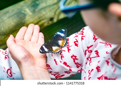 Beautiful butterfly - the white admiral (Limenitis camilla) sits on the young girl's shoulder and hand.
