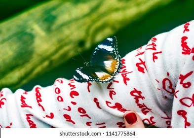 Beautiful butterfly - the white admiral (Limenitis camilla) sits on the girl's arm.